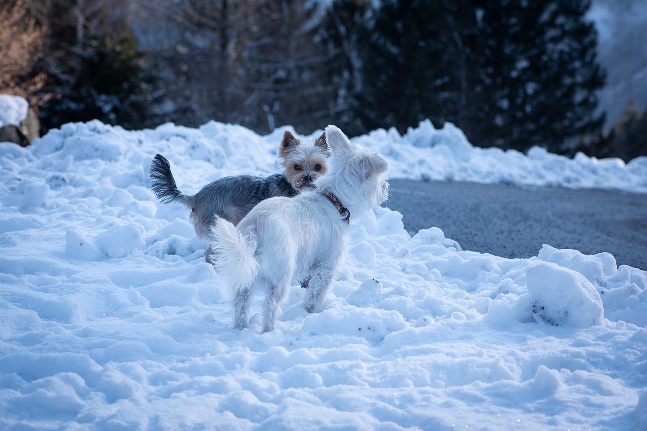 Ta hand om tassarna på vintern
