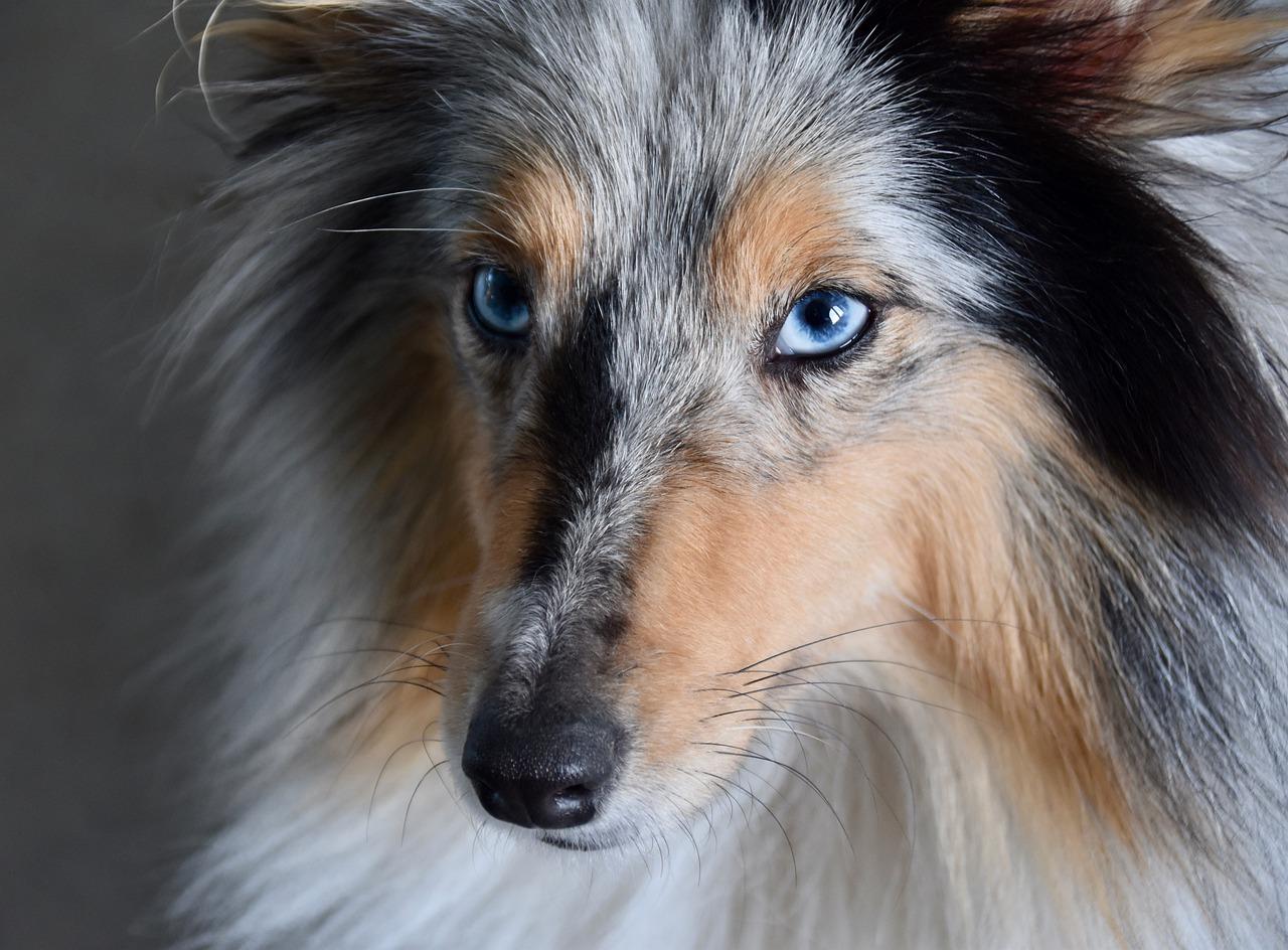 Myter om hundar – vad gäller?