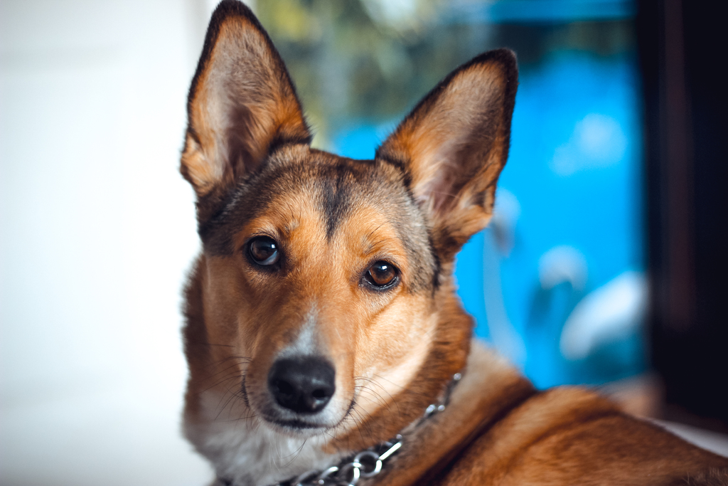 Unika fakta om hundar