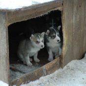 Bygg en egen hundkoja till din fyrbente vän