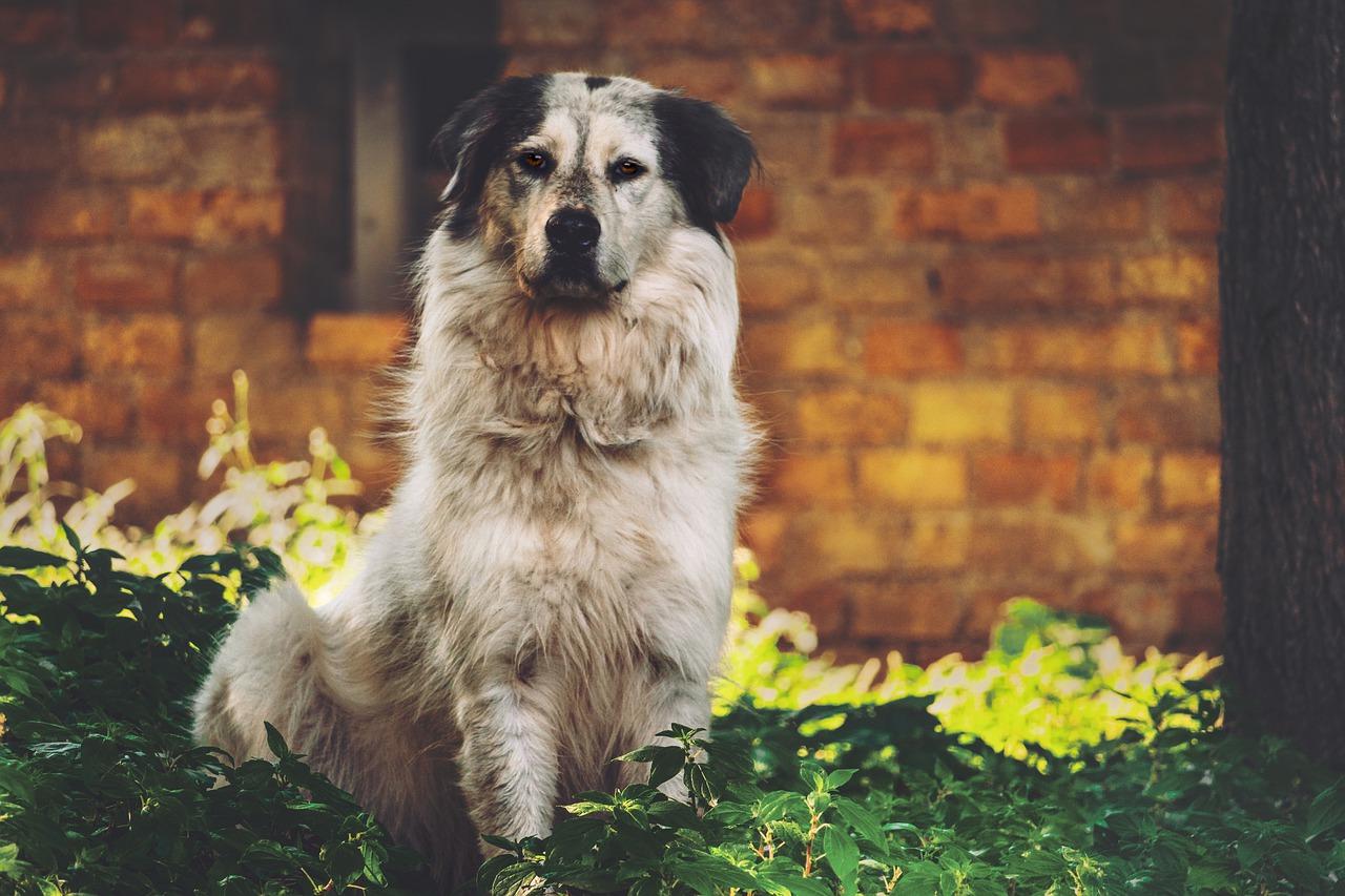 Munhälsa för hundar