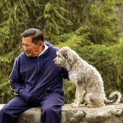 Hitta en bra hunduppfödare